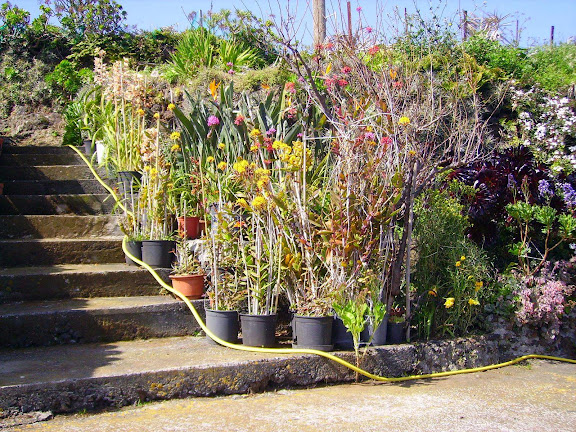 Garten einer Palmera,La Palma,Kanaren,