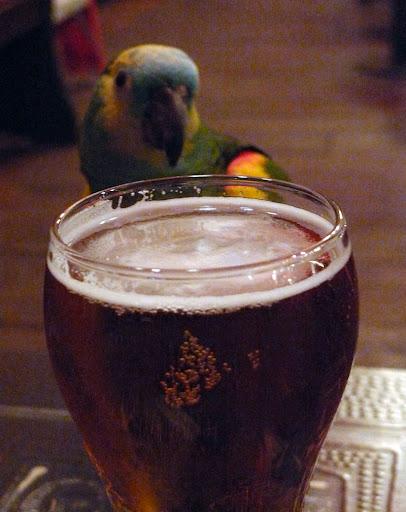 Reggie the parrot