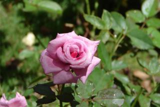 小王子玫瑰園民宿--人文精緻住宿:一個充滿植物療癒力量的香氣空間