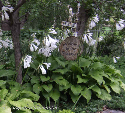 The Secret of My Success with Hostas