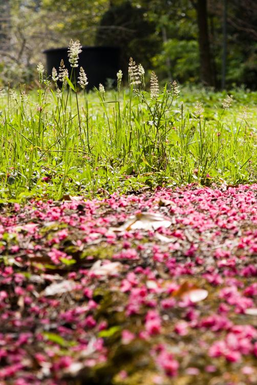 阿里山頂湖步道散步兼拍花
