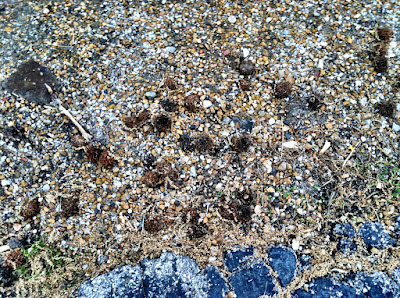 Sweetgum ball asphalt driveway photo