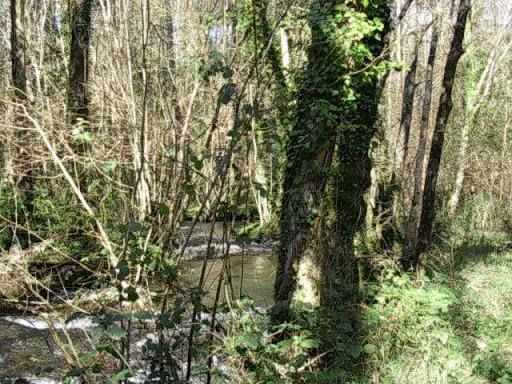 Paseo por el Rio Mandeo R%C3%ADo-Mandeo-12-arboles