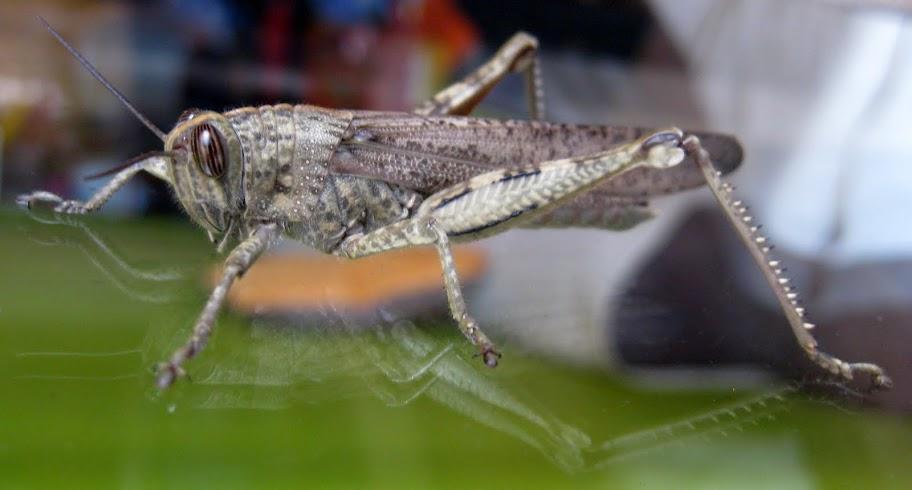 Slike insekata- buba IMG_1247