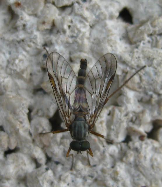 Slike insekata- buba IMG_3464