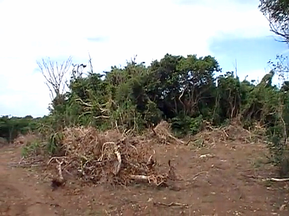 habitat destruction on the island of Iriomote