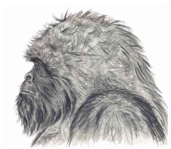Sasquatch Side View by Patricia Baker