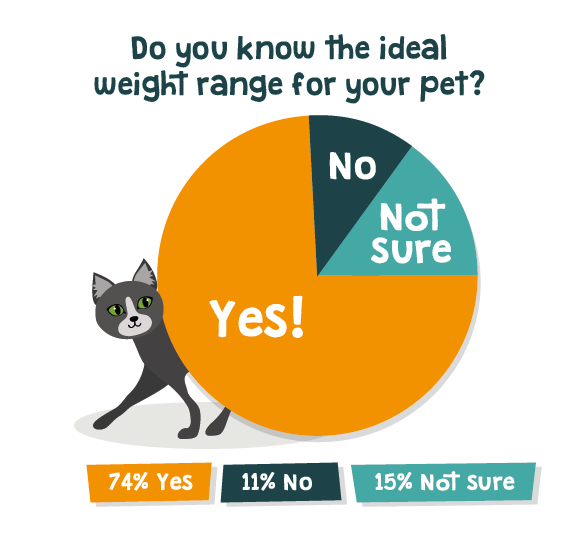 is my cat overweight