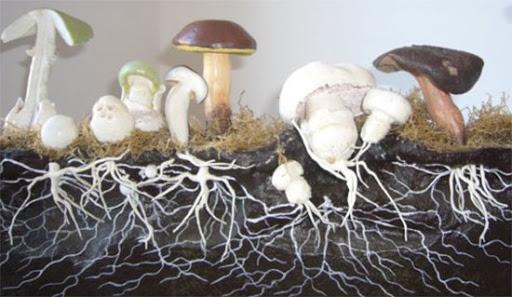 купить семена грибов