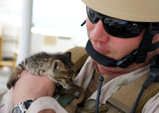 cute curious tabby kitten rescued by navy sailors