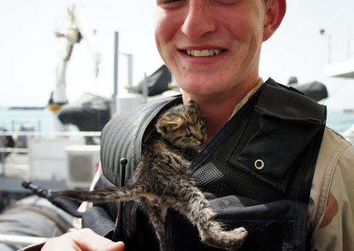 cute rescue tabby kitten climbs in sailor's jacket
