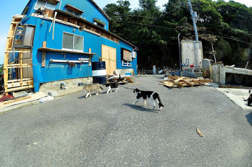 cute cats on island tashirojima after earthquake