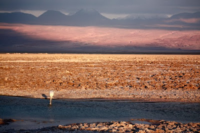 Atacama Desert excursion to the salt flats in Chile
