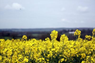 黄色附近Peaslake在英国萨里