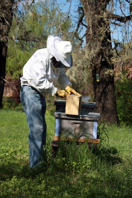 Beekeeper at Michel-Schlumberger winery in Sonoma California