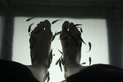Garra Rufa fish pedicure in London