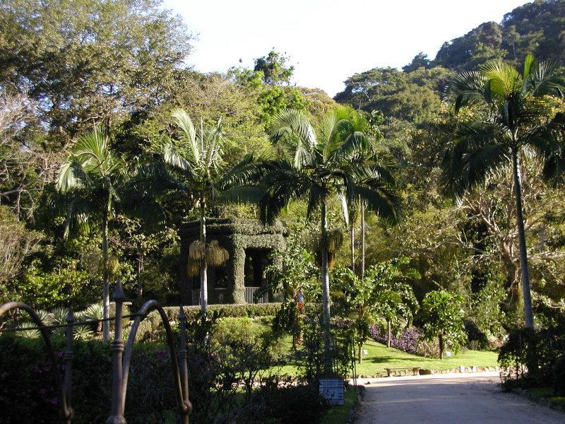 ipe de jardim botânico:Jardim vale muito uma visita, a exuberância da sua vegetação é