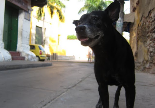 Stray dogs in Cartagena