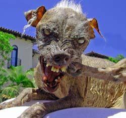 nasty_dog