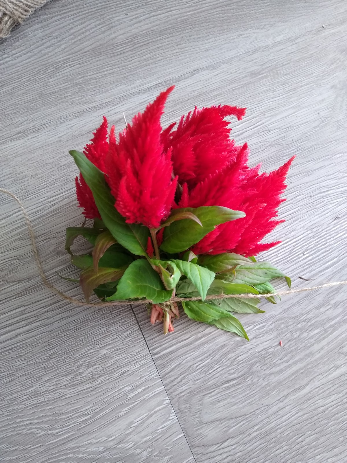 bundled celosia picture