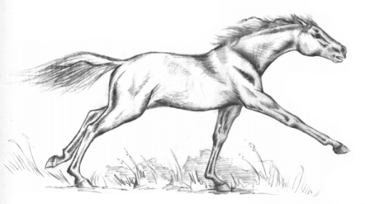 The Gaketan Mare