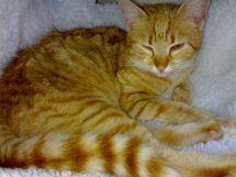 Rubi, gatita muy cariñosa abandonada en la calle. Vitoria ¡ADOPTADA! D6