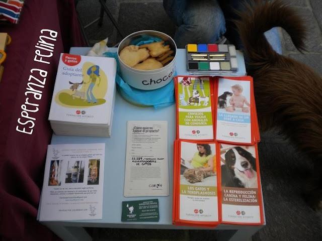 """Esperanza Felina en """"El Mercado de La Almendra"""" en Vitoria - Página 2 DSCN4270"""