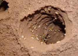 sand-bath3