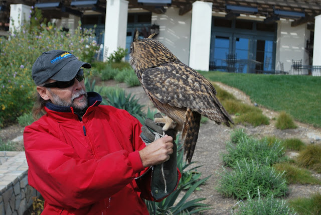 This is a photo of Paul and the Eagle Owl talking to a group of people.