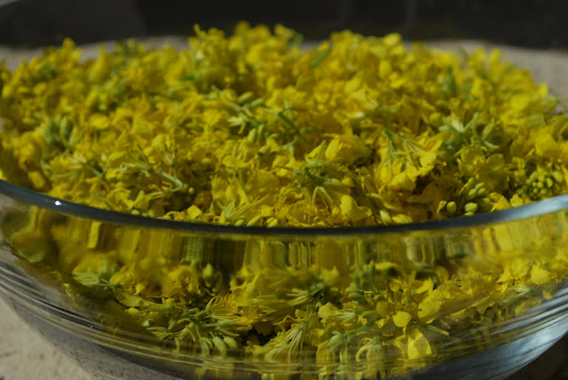 This is a photo of a glass bowl full of freshly picked, bright yellow mustard flowers.