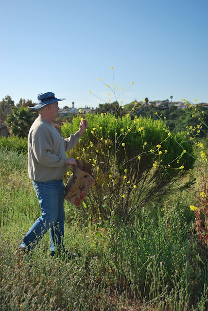 This is a photo of Kieth Beatty picking mustard flowers in Rose Canyon, San Diego, CA.