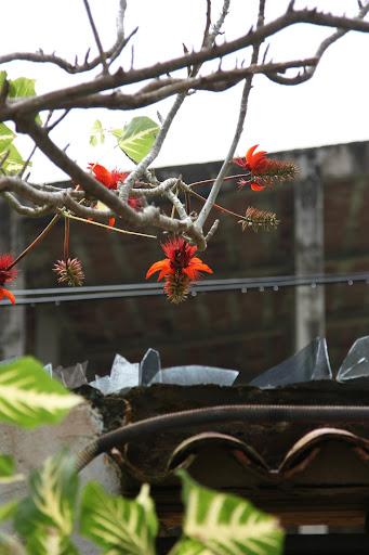 Странный плод над забором