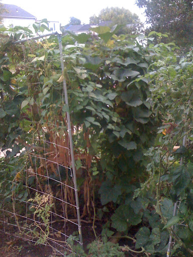 Do they make 2-way elbows for trellises? Photo%203-724051
