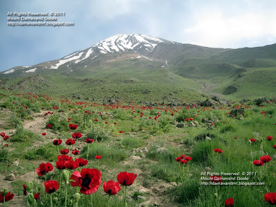 Damavand Mountain Natural poppy field