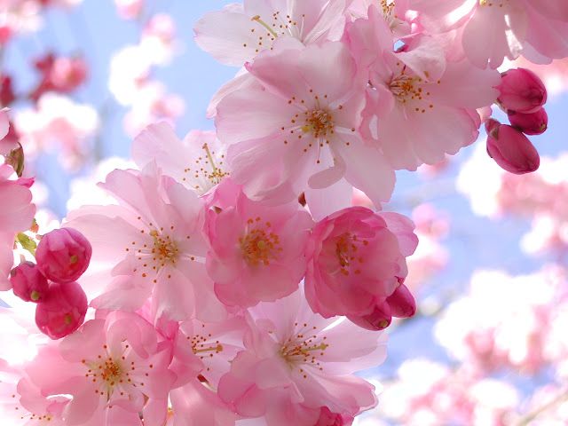 https://lh4.googleusercontent.com/__xIxG4nbLcQ/SLpac43GekI/AAAAAAAAL6I/qD6JVl8HgYk/s640/flowers%20%2834%29.jpg