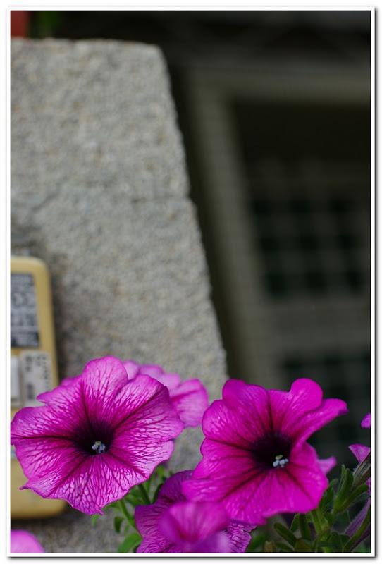 DA ☆ 55/1.4 花草