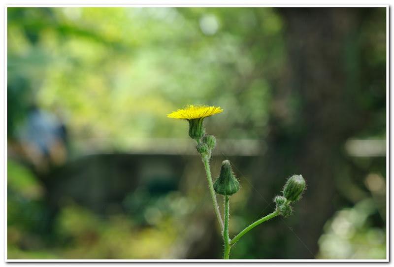 東菜系-植物園隨拍