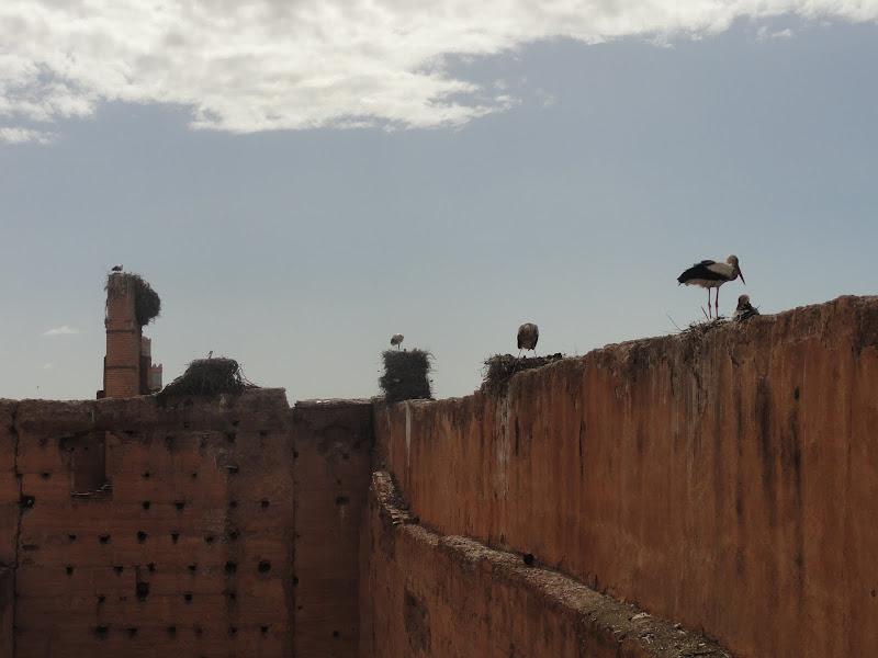 Passeando por Marrocos... - Página 5 DSC08310