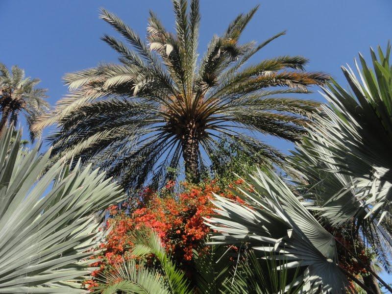 Passeando por Marrocos... - Página 5 DSC08421