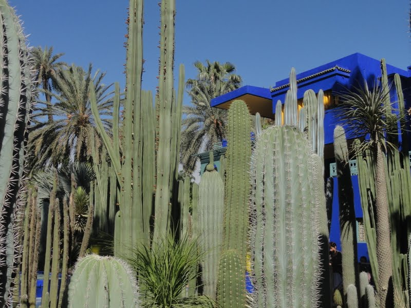 Passeando por Marrocos... - Página 5 DSC08426