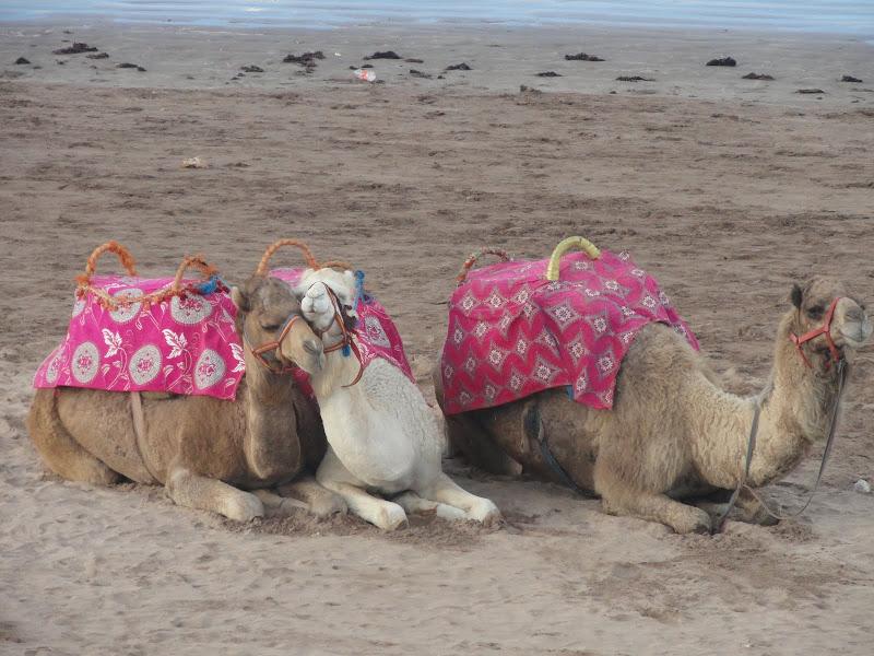 marrocos - Passeando por Marrocos... - Página 6 DSC09126