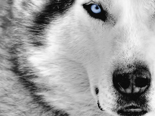 5 Wild Wolves Wallpaper Collection For Your Desktop