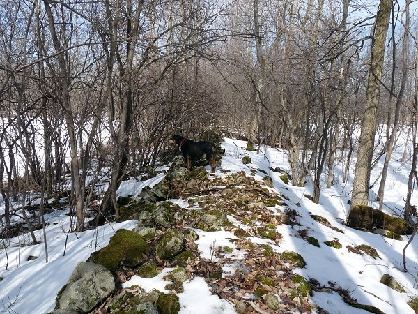 moss topped stone wall