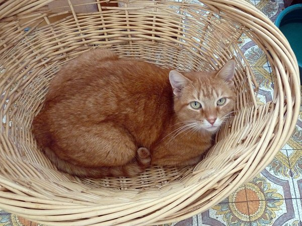 Stewy the can in a basket
