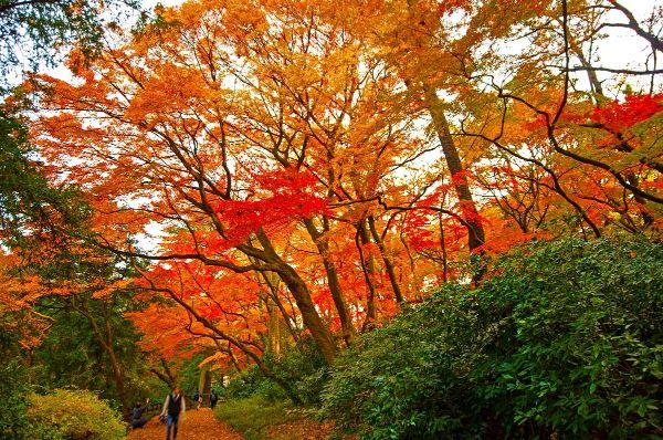 Ngắm lá phong đỏ ở Vườn quốc gia Hokkaido