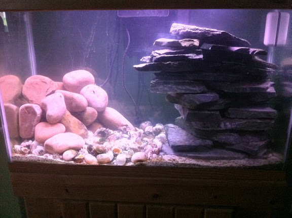 Re-aquascaping advice requested Tang%20tank