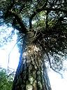Fotos Gratis Naturaleza Árboles