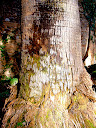 Fotos Gratis troncos de árbol