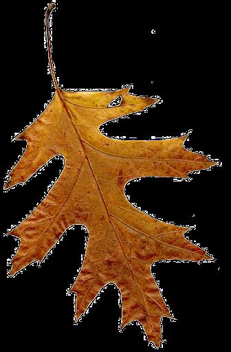 fotos gratis de hojas secas