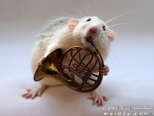 فئران فنانين واخر شقاوه